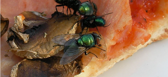 I'll have flies with my pizza